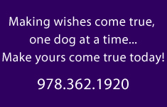 Successful Dog Training in Billerica Massachusetts 978-362-1920